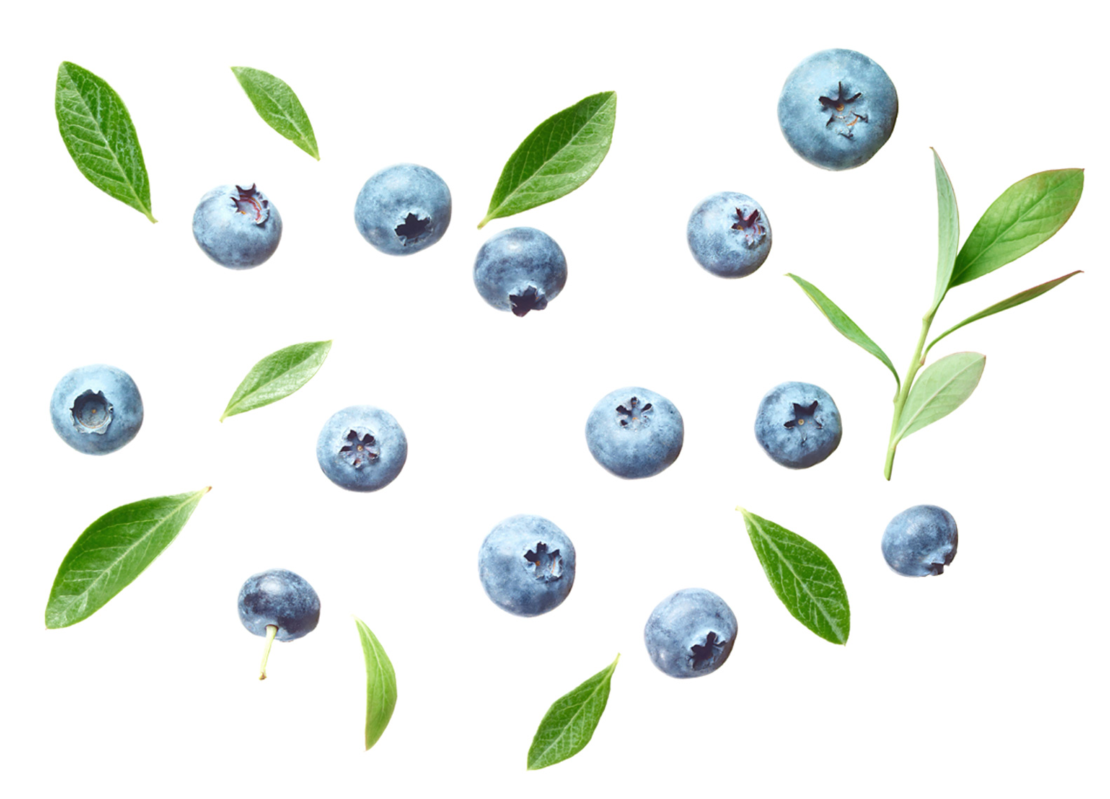 Blueberry_2012_07-DUP.jpg